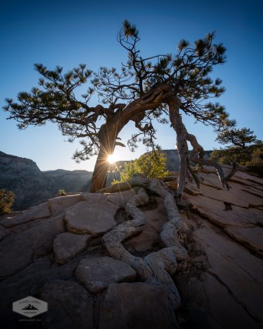 Lone Tree in Zion National Park