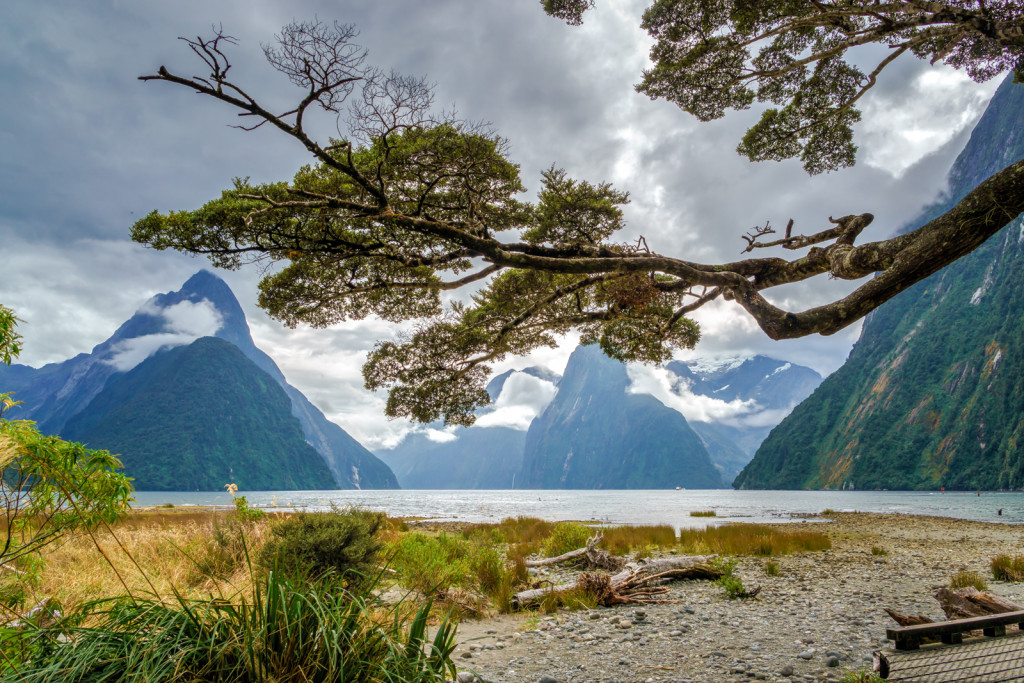 Milford Sound Tree Branch