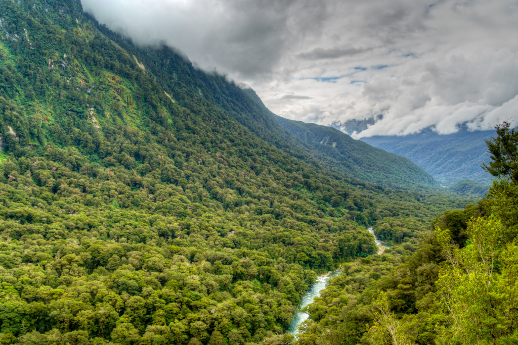 Hollyford Valley, New Zealand