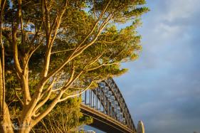 Harbour Bridge and Tree