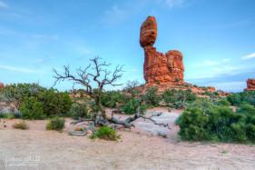 Dead Tree near Balanced Rock