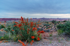 Flowers at Arches