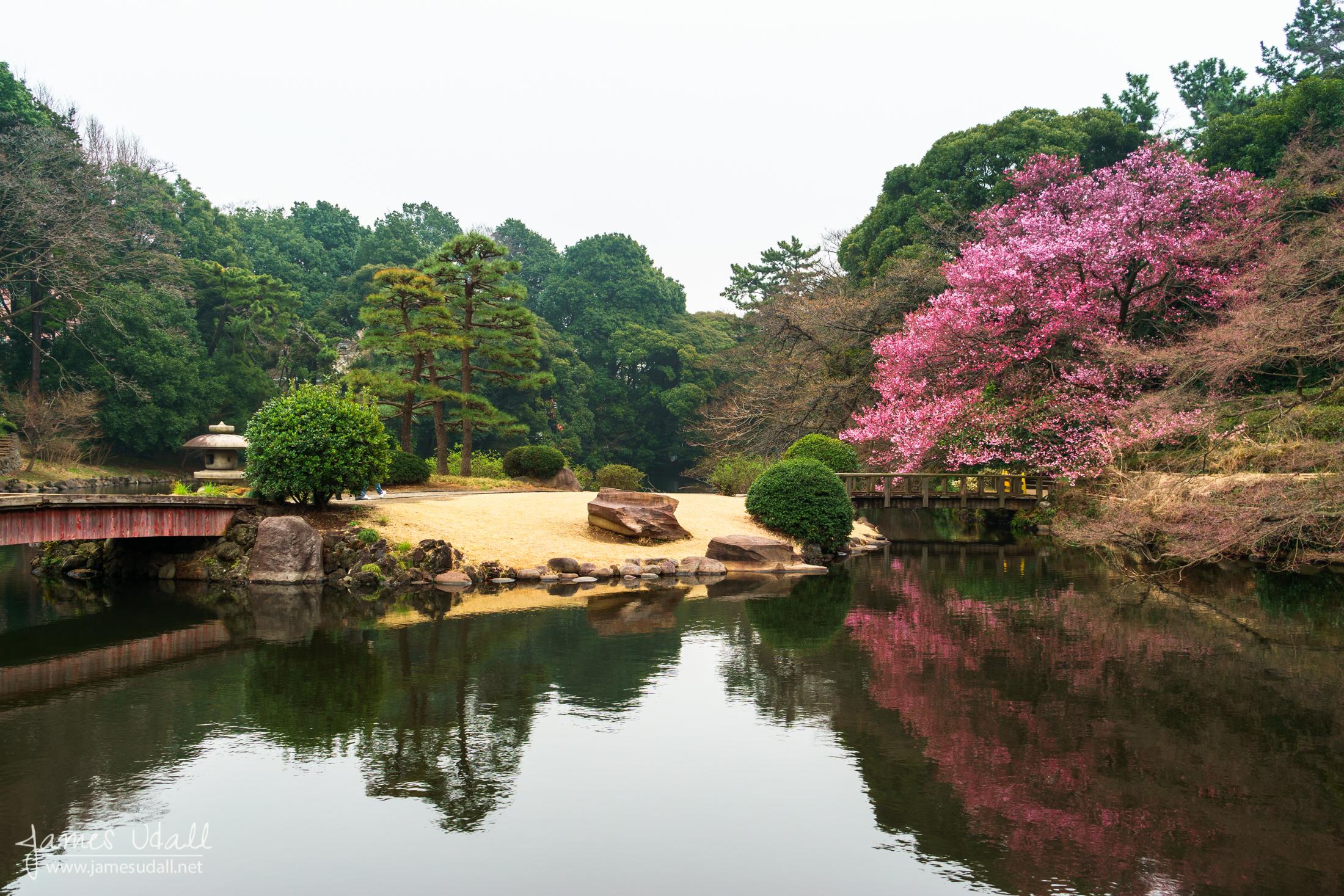 Sakura_Pond