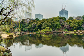 Pond at Shinjuku Gyoen