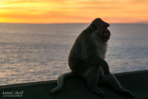 Sunset Monkey
