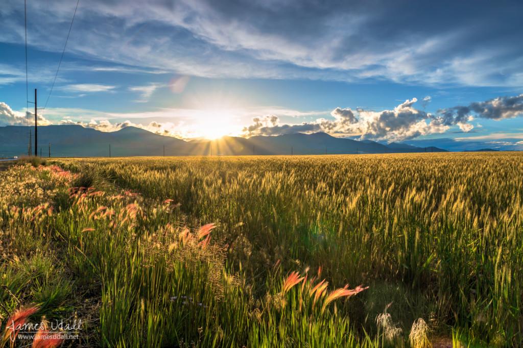 Grassy Fields at Sunset