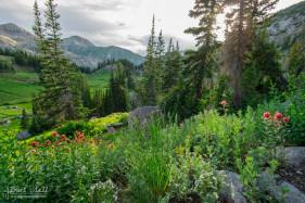 Wildflowers on Catherine's Pass Trail