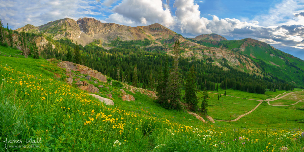 Wildflowers in Albion Basin
