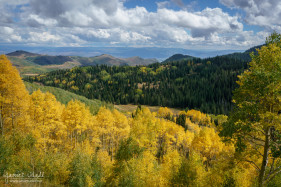 Changing Leaves in the Wasatch