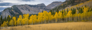 Mount Timpanogos Meadow in Fall