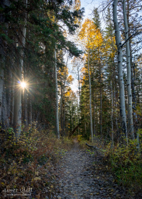 Red Pine Trail in the Fall