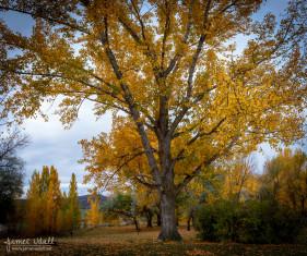 Autumn XL