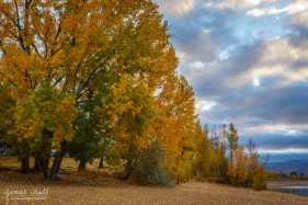 Fall Leaves at Pineview Resevoir