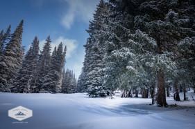 Fresh Snow at Guardsman Pass
