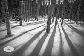 Snowy Aspen Shadows