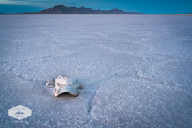 Forgotten Hat at the Salt Flats