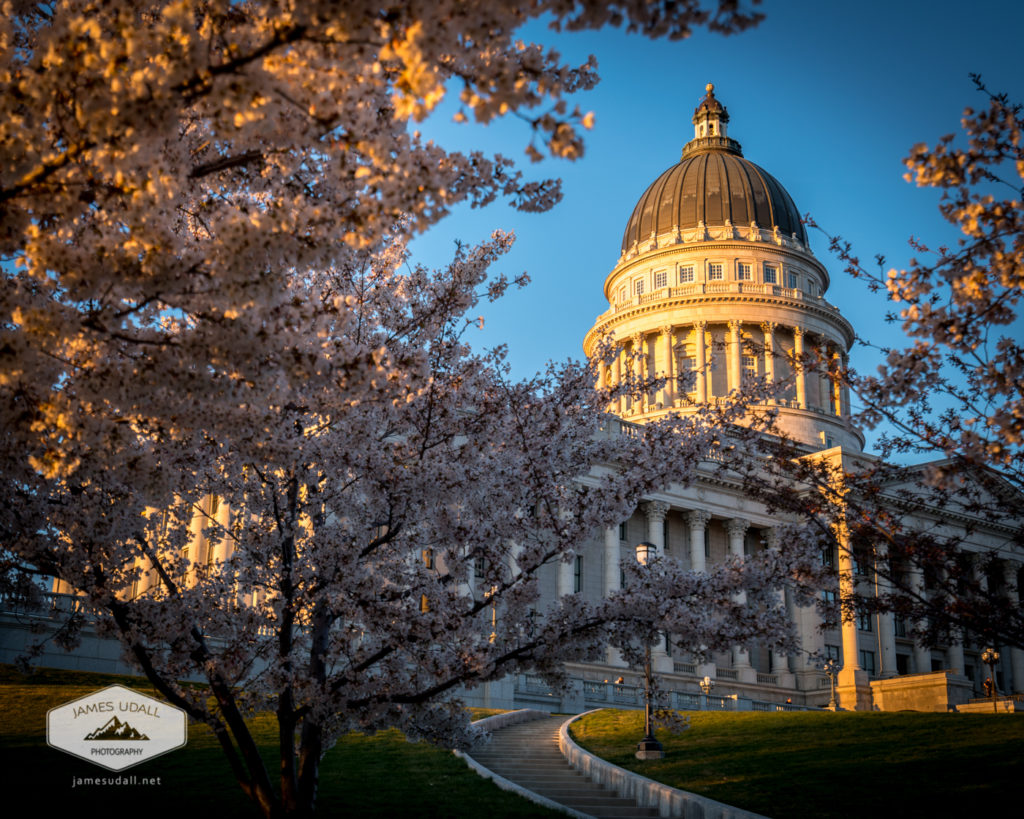 Capitol through the Blossoms