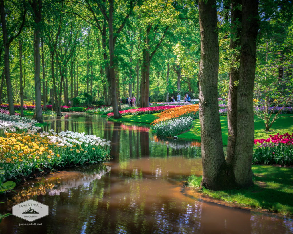Colorful Keukenhof Garden