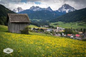 Dandelions in the Dolomites
