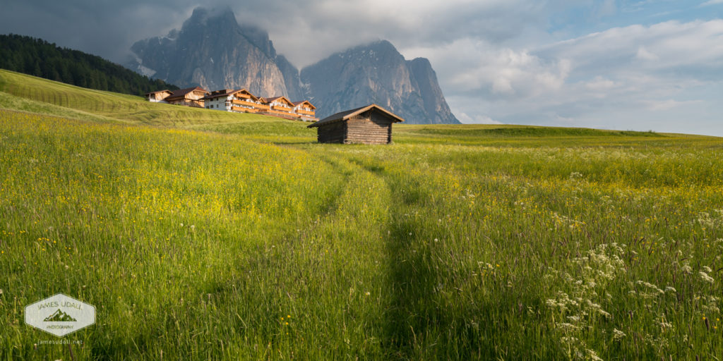 Field in the Dolomites