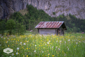 Shed and Flowers