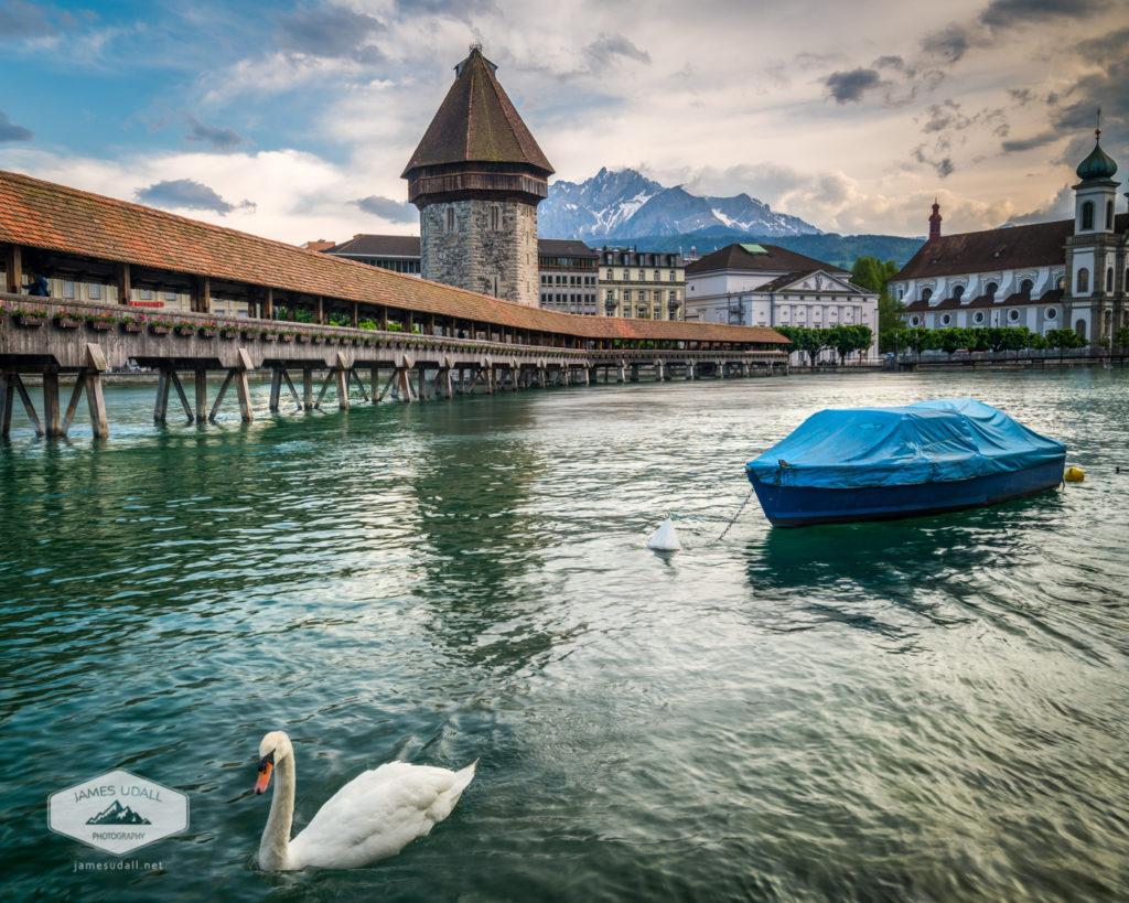 Swan on the Reuss River