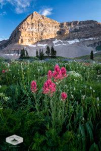 Mount Timpanogos Wildflowers
