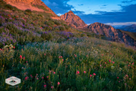 Summer Wildflowers at Mount Timpanogos