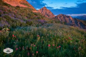 Summer Wildflowers at Mount Timpanogos