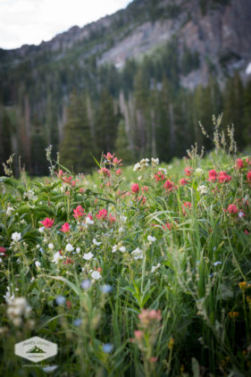 Wildflower Bouquet at Albion Basin