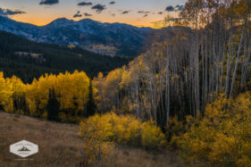 Fall Aspens at Dusk in the Wasatch