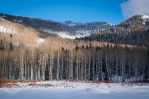 Winter Trees in Big Cottonwood Canyon