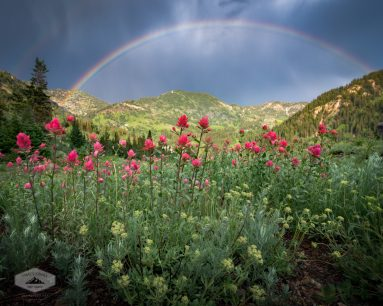 Rainbow and Wildflowers